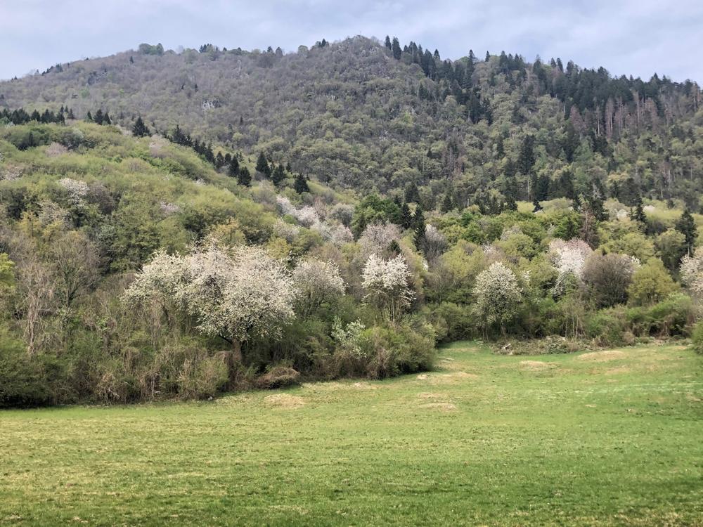 Primavera nella zona di Pradis