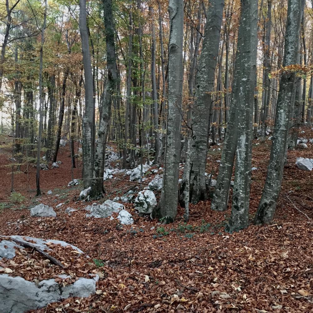 Faggete e rocce carsiche a Pradis