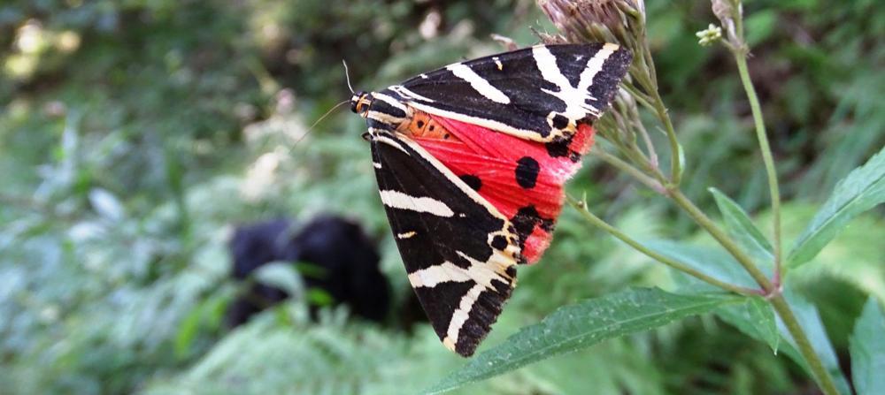 Farfalla - Forra del Torrente Cosa