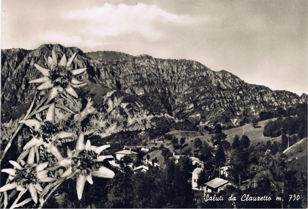 veduta con stelle alpine, anni '60